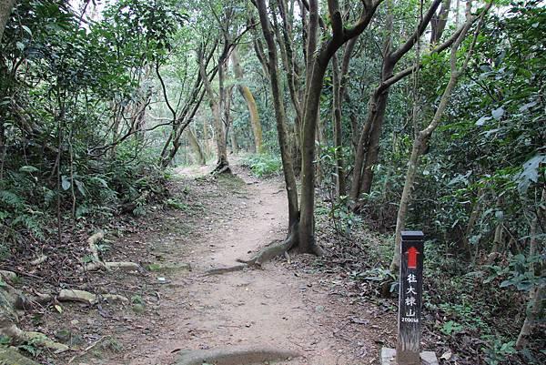 0220林大同山、青龍嶺、大棟山 (47).JPG