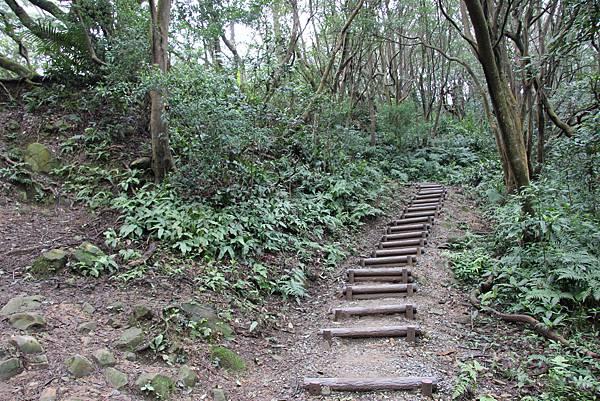 0220林大同山、青龍嶺、大棟山 (55).JPG