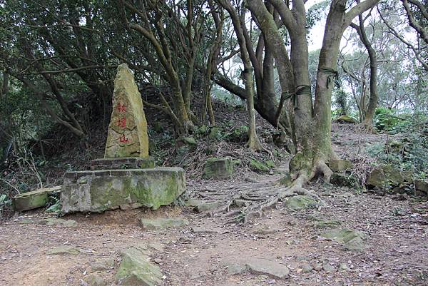 0220林大同山、青龍嶺、大棟山 (56).JPG