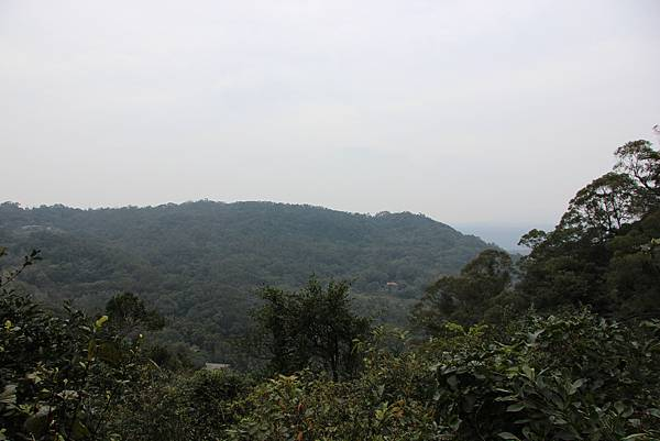 0220林大同山、青龍嶺、大棟山 (71).JPG