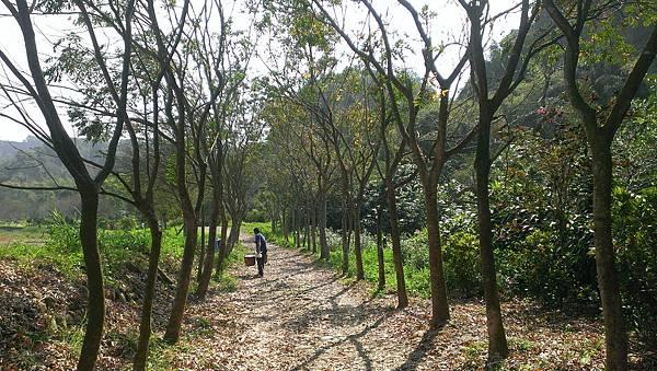 0228清水岩步道 (6).jpg