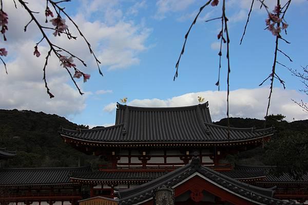 0325關西機場購票、京都、宇治平等院、宇治上神社 (43).JPG