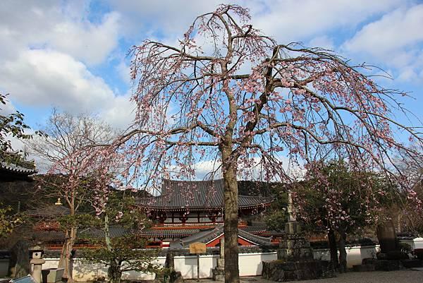 0325關西機場購票、京都、宇治平等院、宇治上神社 (44).JPG