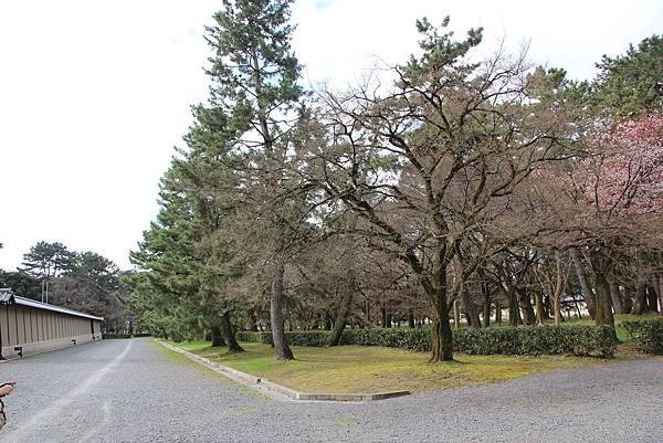 0326京都御苑賞櫻 (55).JPG