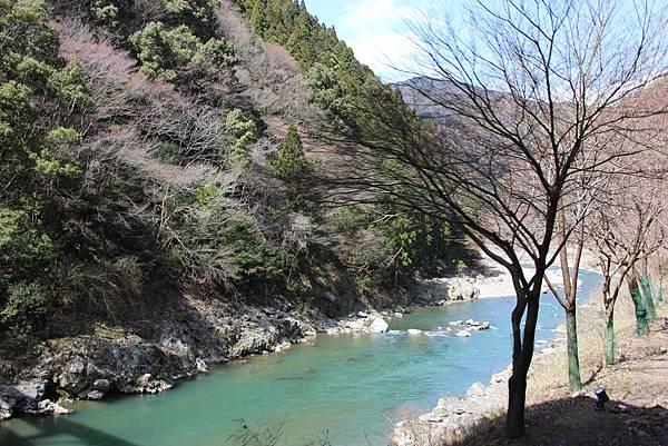 0326京都嵐山瑳峨野觀光火車、保津川遊船 (19).JPG