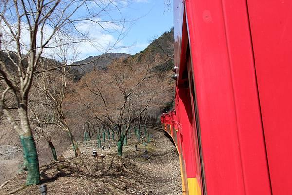 0326京都嵐山瑳峨野觀光火車、保津川遊船 (20).JPG