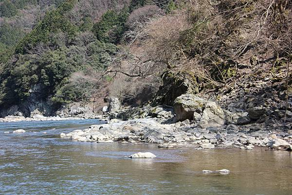 0326京都嵐山瑳峨野觀光火車、保津川遊船 (52).JPG