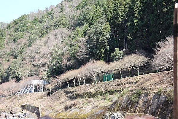 0326京都嵐山瑳峨野觀光火車、保津川遊船 (73).JPG