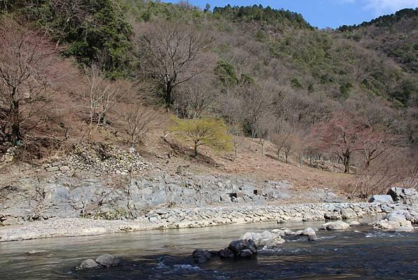 0326京都嵐山瑳峨野觀光火車、保津川遊船 (83).JPG
