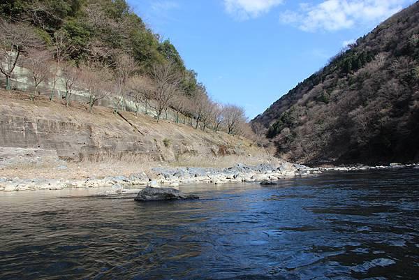 0326京都嵐山瑳峨野觀光火車、保津川遊船 (85).JPG