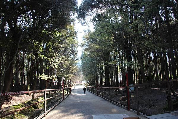 0327京都醍醐寺賞櫻 (11).JPG