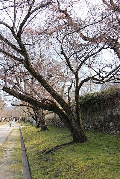 0327京都醍醐寺賞櫻 (25).JPG