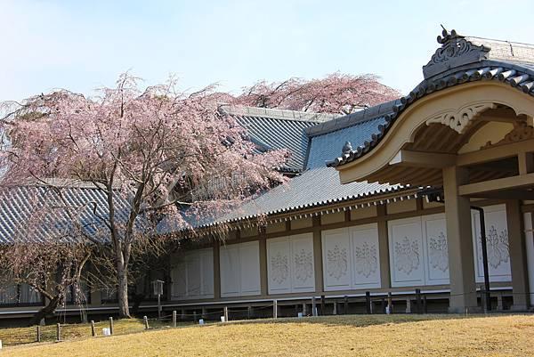 0327京都醍醐寺賞櫻 (30).JPG