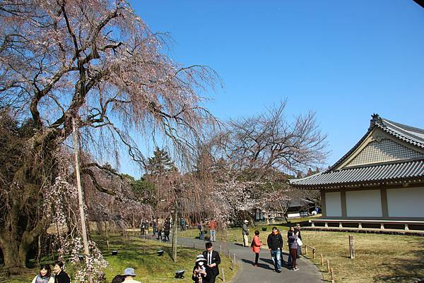 0327京都醍醐寺賞櫻 (41).JPG