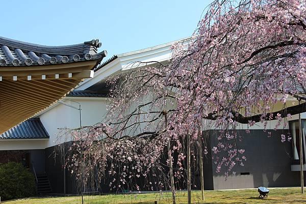 0327京都醍醐寺賞櫻 (48).JPG