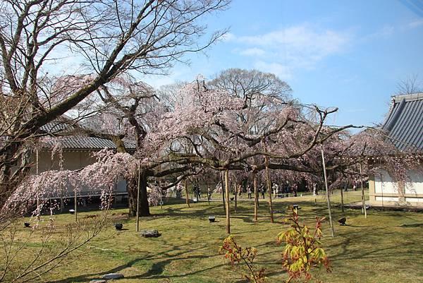 0327京都醍醐寺賞櫻 (54).JPG