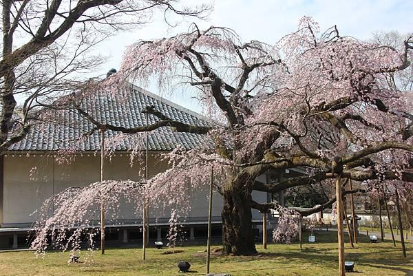 0327京都醍醐寺賞櫻 (58).JPG
