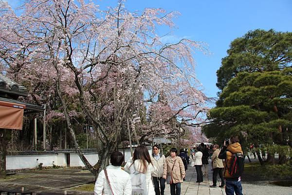 0327京都醍醐寺賞櫻 (62).JPG