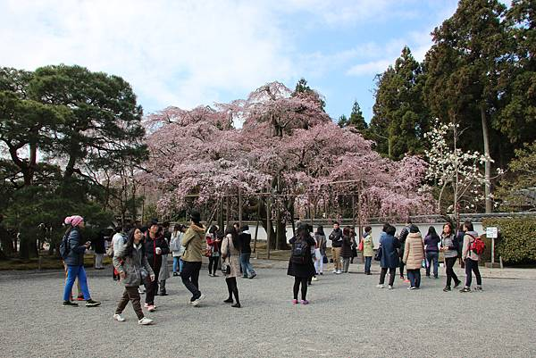 0327京都醍醐寺賞櫻 (63).JPG