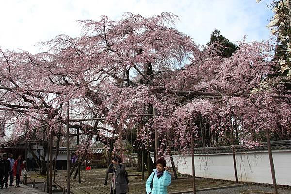 0327京都醍醐寺賞櫻 (64).JPG