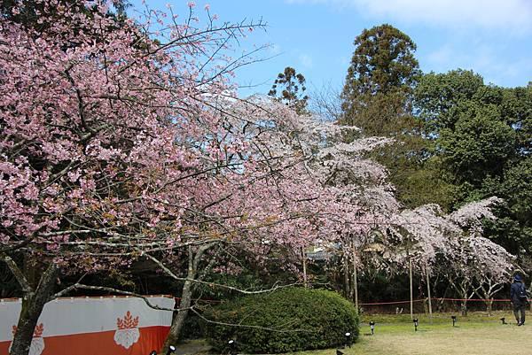 0327京都醍醐寺賞櫻 (71).JPG