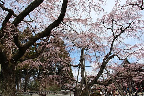 0327京都醍醐寺賞櫻 (90).JPG
