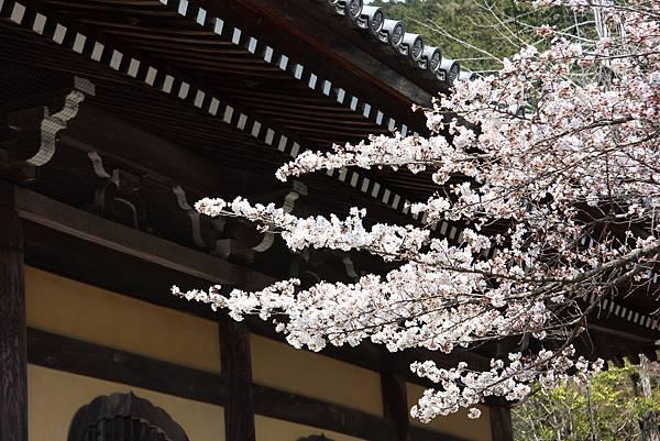 0327京都南禪寺 (14).JPG
