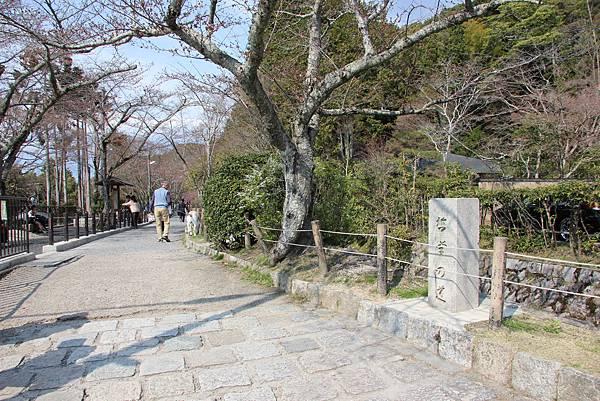 0327京都哲學之道 (3).JPG