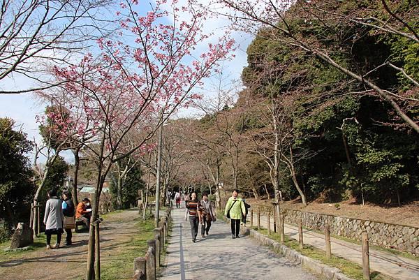 0327京都哲學之道 (5).JPG