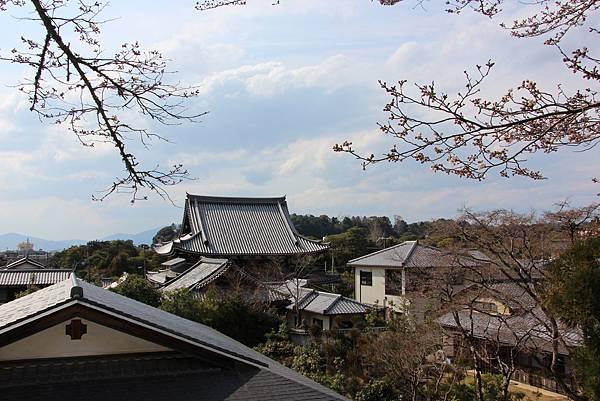 0327京都哲學之道 (6).JPG