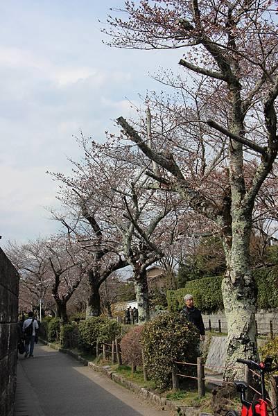 0327京都哲學之道 (11).JPG