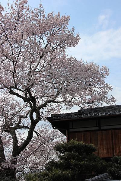0327京都哲學之道 (15).JPG