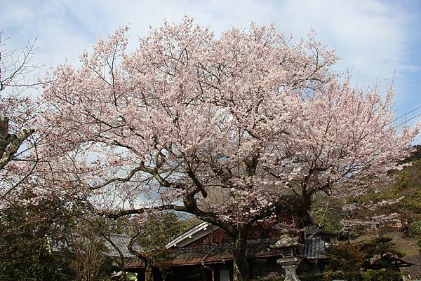 0327京都哲學之道 (18).JPG