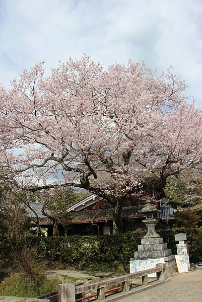 0327京都哲學之道 (19).JPG