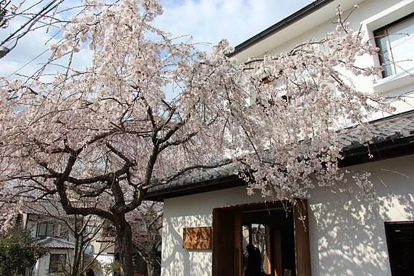 0327京都哲學之道 (24).JPG