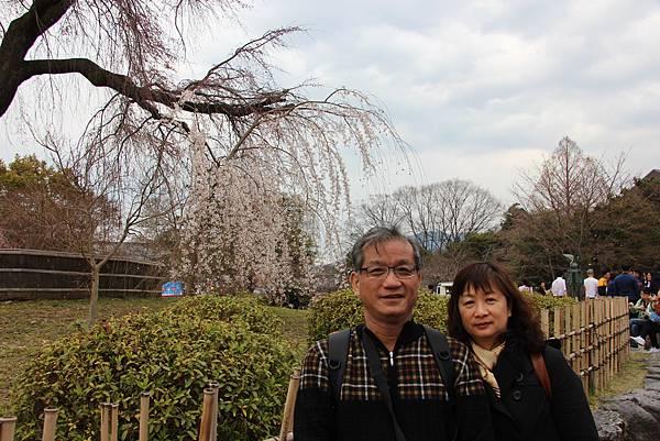0327京都八阪神社、花見小路 (7).JPG