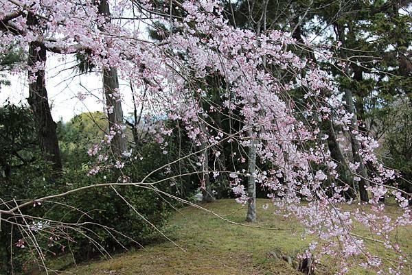 0327京都八阪神社、花見小路 (9).JPG