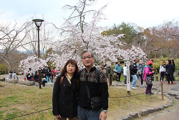 0327京都八阪神社、花見小路 (10).JPG
