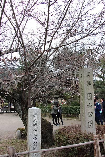 0327京都八阪神社、花見小路 (15).JPG