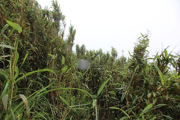 0514小觀音山西峰、小觀音山 (18).JPG