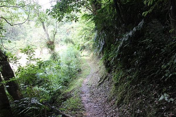 0605金瓜寮溪步道 (21).JPG