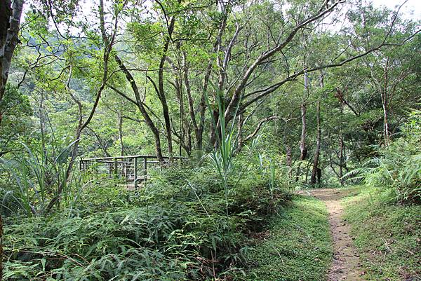 0605金瓜寮溪步道 (49).JPG