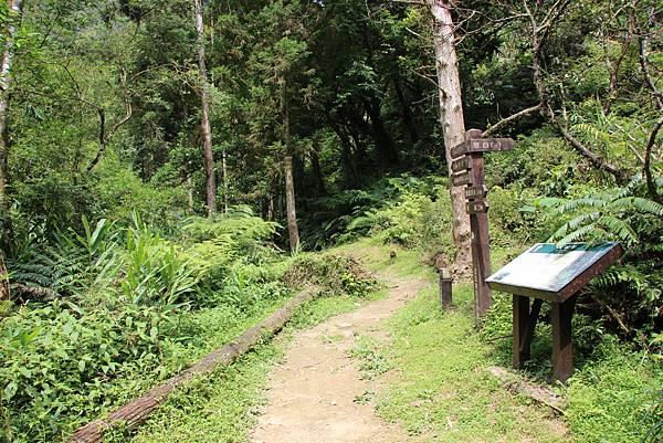 0605金瓜寮溪步道 (78).JPG