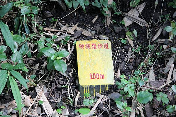 0609硬漢嶺步道 (4).JPG