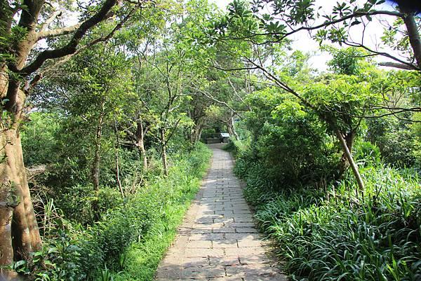0609硬漢嶺步道 (16).JPG