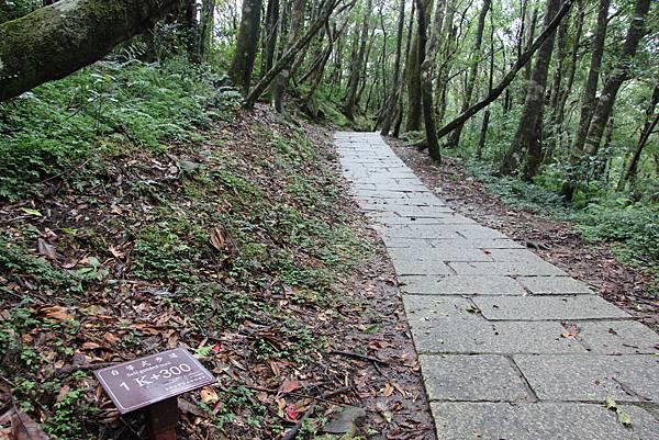 0813復興鄉東眼山 (22).JPG