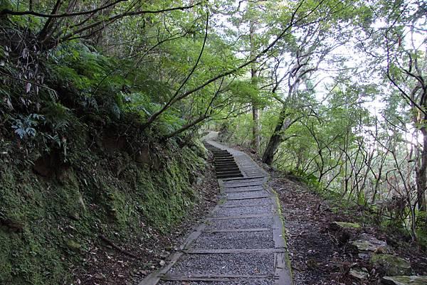 1119東眼山親子步道 (18).JPG