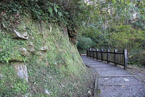 1119東眼山親子步道 (19).JPG