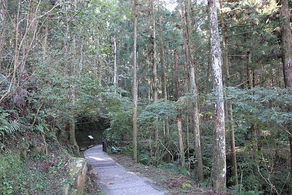 1119東眼山親子步道 (20).JPG