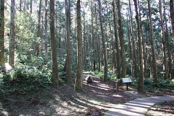 1119東眼山親子步道 (29).JPG